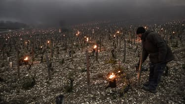 Un vigneron installe en avril dernier des feux pour limiter les risques de gel de sa vigne à Chablis
