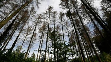 Les luttes contre les mines, l'agro-industrie et l'exploitation forestière sont les dangereuses pour les activistes du climat. (illustration)