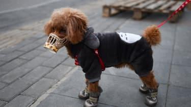 Un chien à Pékin (Chine), portant une protection contre le Covid-19, le 25 février 2020