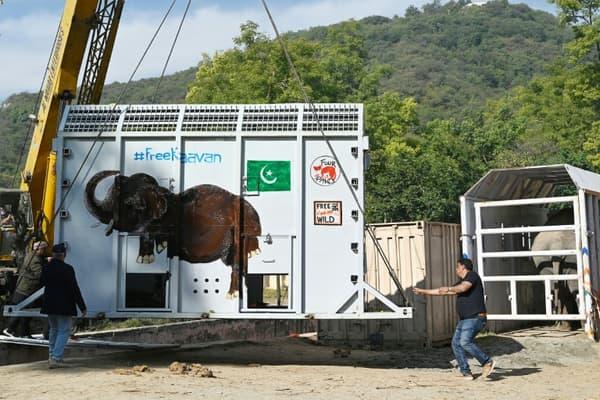 Le caisson métallique dans lequel l'éléphant Kaavan sera installé pour son voyage en avion cargo vers une réserve au Cambodge, le 28 novembre 2020 au zoo d'Islamabad, au Pakistan