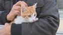 Oscar, le petit chat maltraité par un jeune homme qui s'est fait filmer sur Internet, est sain et sauf.