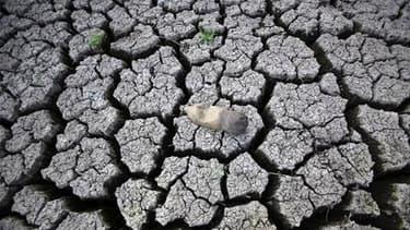 Près d'une personne sur dix estime que le réchauffement climatique est le fruit d'un cycle naturel et qu'il n'y a donc pas de raison de s'en inquiéter, selon un sondage international. /Photo d'archives/REUTERS/Oswaldo Rivas
