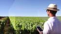 Les usages du drone sont multiples en viticulture de précision notamment pour contrôler les pieds de vignes manquants.