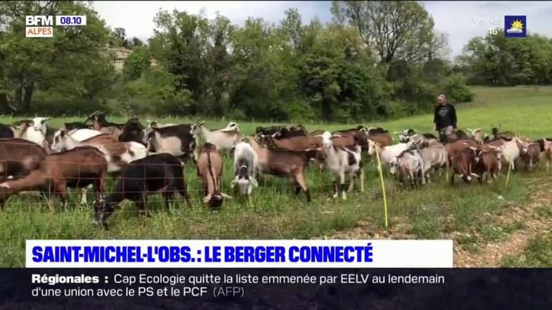 Saint-Michel-l'Observatoire: rencontre avec un berger qui partage son quotidien sur les réseaux sociaux