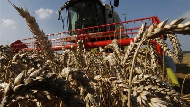 Le gouvernement annonce un plan d'action visant à juguler la flambée des prix des céréales dont la volatilité menace les éleveurs, avec notamment des initiatives pour coordonner une réponse européenne et avec les autres grandes puissances mondiales du G20