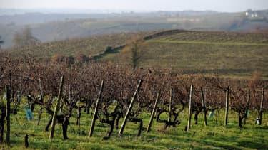 En Italie comme en France la viticulture a souffert de la mévente de sa production de vin, à cause de la pandémie qui a réduit ses débouchés dans la restauration.
