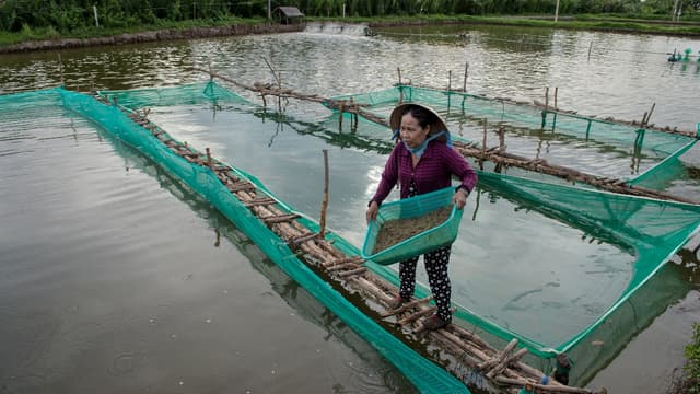 La production de riz vietnamien  a rapporté moins de deux milliards d'euros en 2016, contre quelque 2,5 milliards pour la crevette.