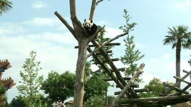 Le zooparc de Beauval récupére notamment les déchets organiques des pandas pour sa nouvelle usine de méthanisation: le site rduit ainsi sa facture de gaz de 20 %