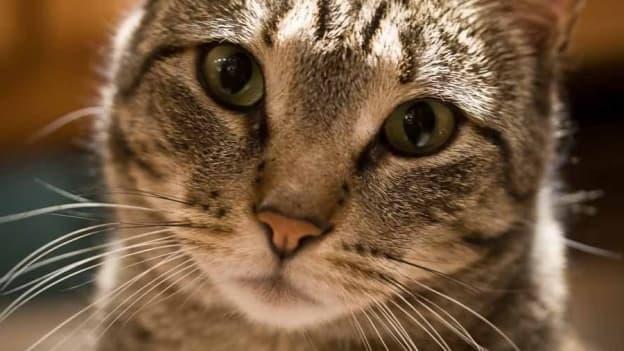 """Actuellement, un chat est considéré dans le Code civil comme un """"bien meuble"""", au même titre qu'une chaise ou qu'une armoire."""