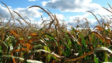 L'Ottawa utilise également des pesticides pour ses cultures.