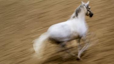 Un cheval lors d'un spectacle équestre à Vienne en 2015 (photo d'illustration)