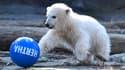 L'oursonne Hertha joue avec une balle à son nom, le 2 avril 2019 au zoo de Berlin, en Allemagne.