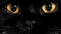 70% des chats recueillis par la SPA britannique sont noirs. Image d'illustration.