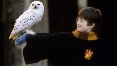 Harry Potter et sa chouette, Hedwige.