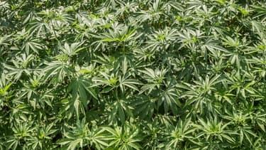 A conditions de respecter certaines règles, les banques américaines peuvent accepter l'argent du cannabis légal.