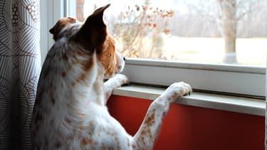 Votre chien peut développer des comportements qui sont le signe de son angoisse