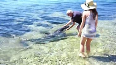 En Croatie, une famille rencontre un dauphin aux abords d'une plage