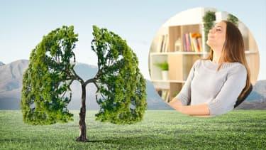 GreenReso, spécialiste de la purification de l'air