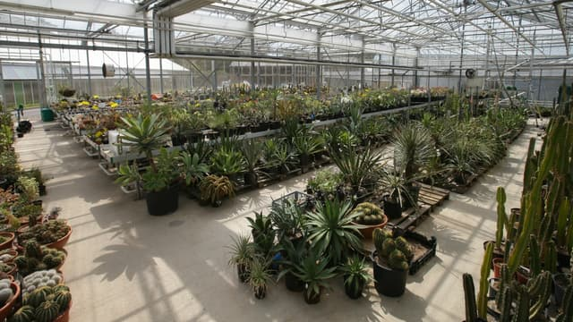 La serre tropicale des Jardins botaniques royaux de Kew au Royaume-Uni.
