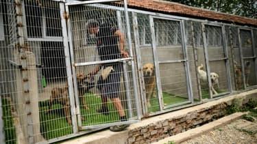 Les chiens ont été récupérés par la Fondation Bardot. (illustration)