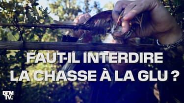 Qu'est-ce que la chasse à la glu et faut-il l'interdire ?