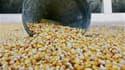 """Des producteurs de maïs français ont déposé jeudi un recours devant le Conseil d'Etat contre l'interdiction de la culture du maïs génétiquement modifié MON810, commercialisé par l'américain Monsanto, estimant que le veto des pouvoirs publics français """"ne"""