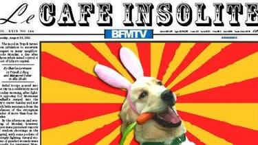 Retrouvez tous les jours le Café insolite de BFMTV.com.