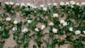 Des fleurs déposées aux Invalides lors de la cérémonie d'hommage aux victimes du terrorisme le 19 septembre.