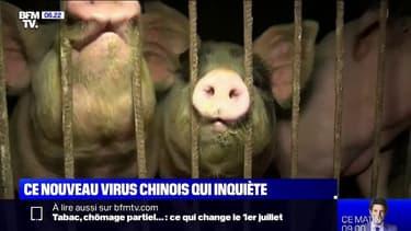 Un nouveau virus de grippe porcine découvert en Chine suscite l'inquiétude