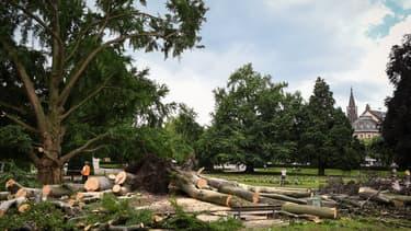 Des arbres tombés à cause des orages à Strasbourg (Photo d'illustration).
