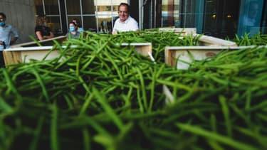 André Roibet pendant la distribution des deux tonnes de haricots verts à Lyon, le 10 juillet 2020