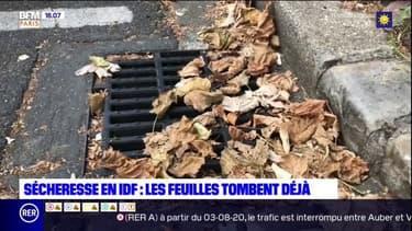 Île-de-France: avec la sécheresse, les feuilles tombent déjà