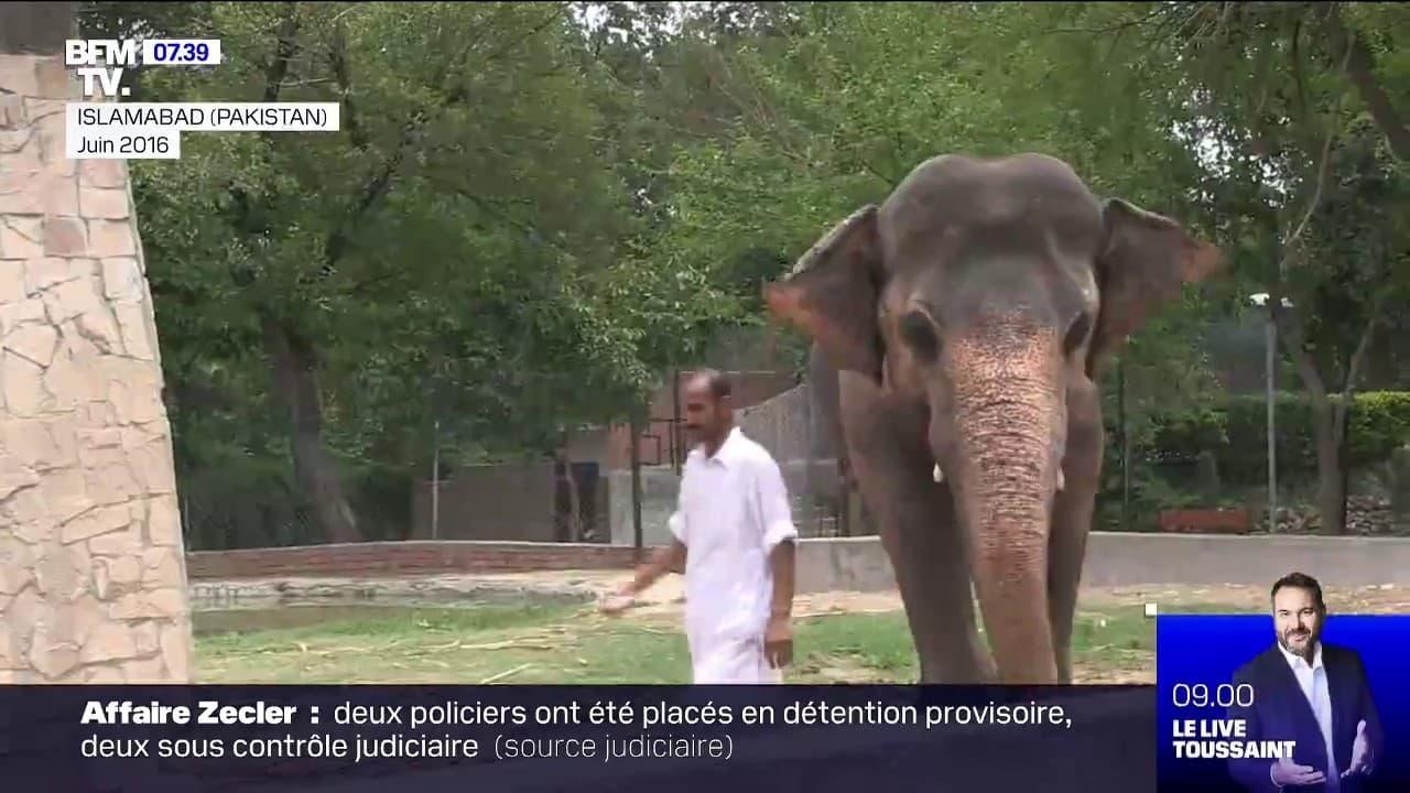 L'éléphant le plus solitaire du monde va quitter le Pakistan, aidé par la chanteuse Cher