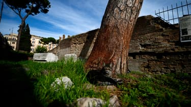 """La fameuse """"Area Sacra"""" où Jules César fut assassiné, à Rome, le 30 octobre 2012."""