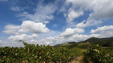 Les vignes de Toscane en Italie, en 2016. (Photo d'illustration).