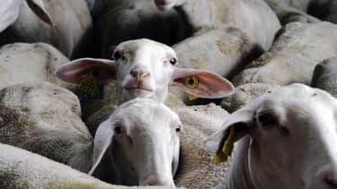 Une quarantaine d'animaux seront présents aux Buttes-Chaumont vendredi.