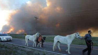 Des habitants et leurs chevaux fuient la région de Colorado Springs.