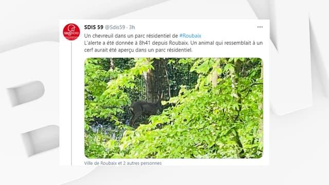 Un chevreuil a été aperçu dans un parc résidentiel à Roubaix.