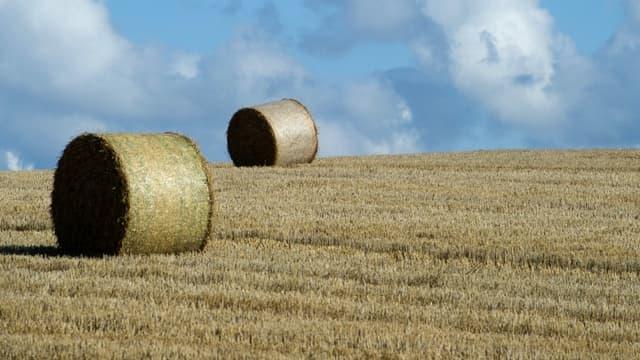 Les agriculteurs appelés à produire plus de biomasse