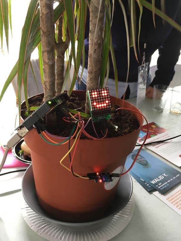 Une plante connectée.