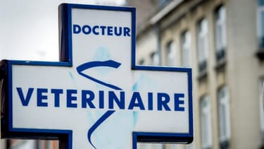 Plus de 5.000 vétérinaires se sont portés volontaires pour venir en renfort des médecins.