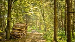 Le développement du bois énergie viendra de l'initiative forte des territoires selon l'Irstea, l'Institut national de recherche en sciences et technologies pour l'environnement et l'agriculture