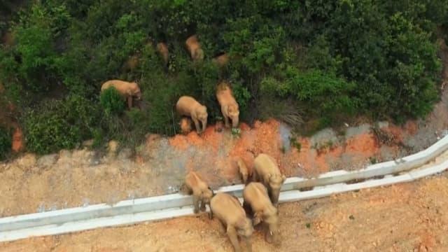 Le troupeau d'éléphants sauvages.