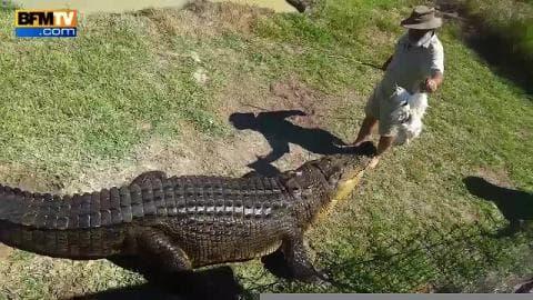 Un homme chevauche un alligator