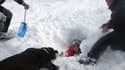 Photo d'archives d'un chien d'avalanche découvrant une personne ensevelie sous la neige, prise le 22 janvier 2009 lors d'une simulation d'accident sur le site de la station de ski du Puigmal dans les Pyrénées-Orientales.