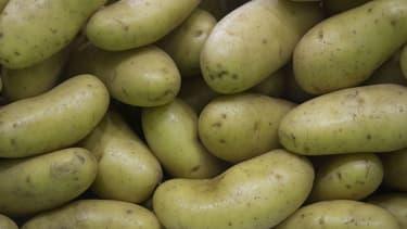 Un champ de pommes de terre vieux de 3.800 ans mis au jour au Canada (photo d'illustration).