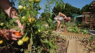 Pour désherber son jardin, les alternatives au glyphosate restent bien moins efficaces.
