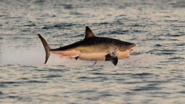 Une vingtaine de requins bouledogues vont être abattus en Nouvelle-Calédonie