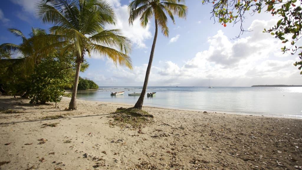 """Guadeloupe: augmentation """"fulgurante"""" des cas de covid-19, selon l'ARS"""