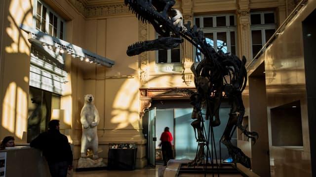 Le spécimen fait plus de 7,50 mètres de long et de 2,50 mètres de haut.